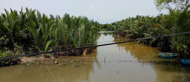 Dredge 50 ha of coconut forest to build reservoir for paper mill